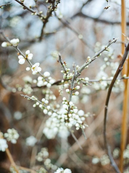 arbre-printemps-bretagne