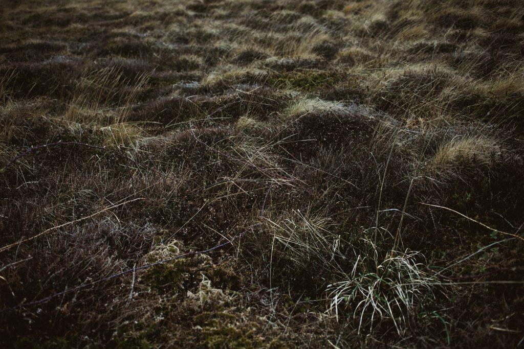 herbes-bretagne