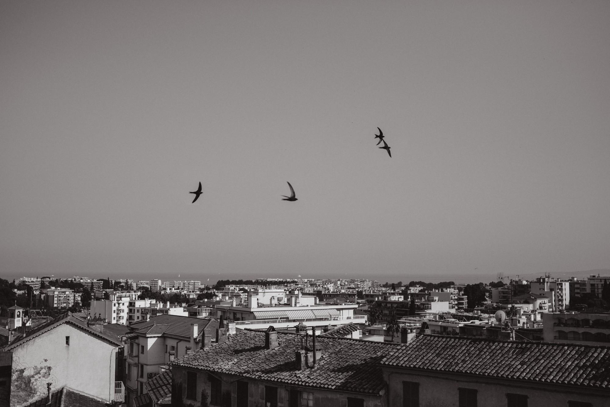 french-riviera-birds